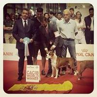 World Dog Show Milán 2015